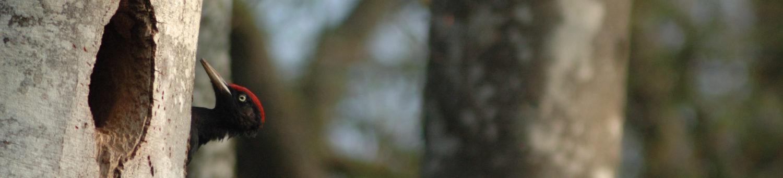 Christophe Rué - Photographie Nature